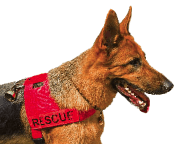 Search and Rescue Dog Association England